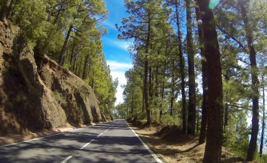 Pine tree zone